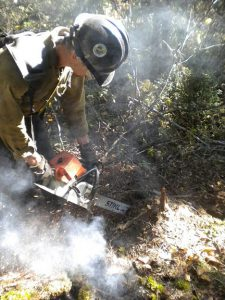 Pagami Creek sawyer