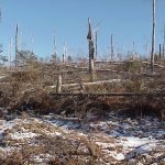 BWCA blowdown