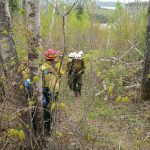 Firefighters on the fireline