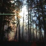 Itasca State Park prescribed fire