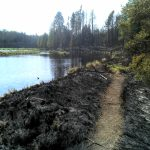 BWCA hiking trail after fire