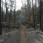 2016 Foss Lake hiking trail after fire