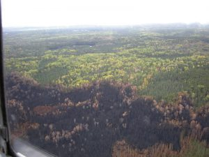Pagami Creek aerial of burned area