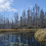 Pagami Creek fire burned area