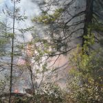 Pagami Creek fire in forest