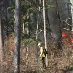 Prescribed fire mopup