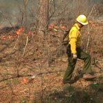 Prescribed fire mop-up