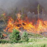 Prescribed fire Red Pine slash 2