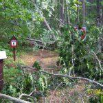Trees across hiking trail, Chippewa National Forest blowdown 2012